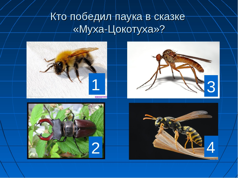 Кто победил паука в сказке «Муха-Цокотуха»? 1 2 3 4