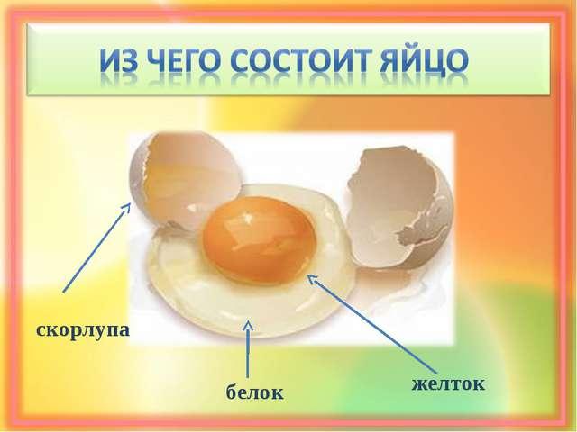 скорлупа белок желток