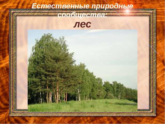 Естественные природные сообщества: лес