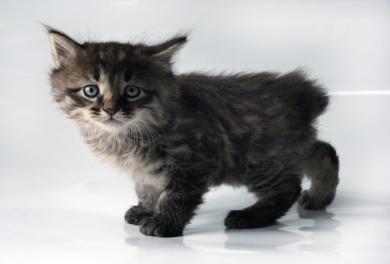 http://shygys-mysyk.org/wp-content/gallery/kitteng/img_6458.jpg