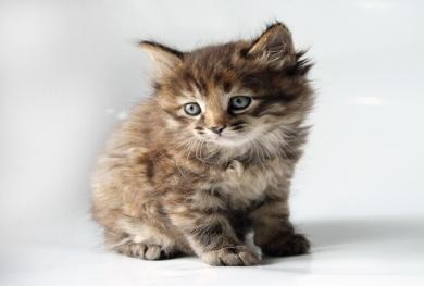 http://shygys-mysyk.org/wp-content/gallery/kitteng/img_6470.jpg