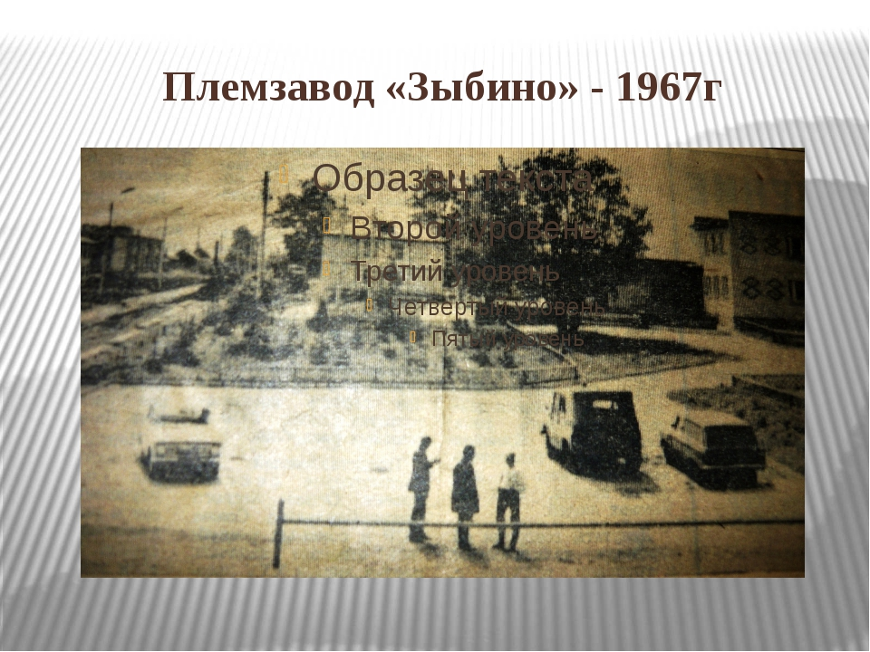 Племзавод «Зыбино» - 1967г