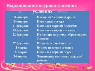 Выращивание огурцов в зимних условиях ДатаНаблюдения 16 январяПосадили 5 с