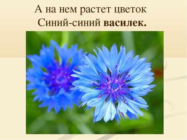 А на нем растет цветок  Синий-синий василек.