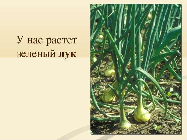 У нас растет зеленый лук