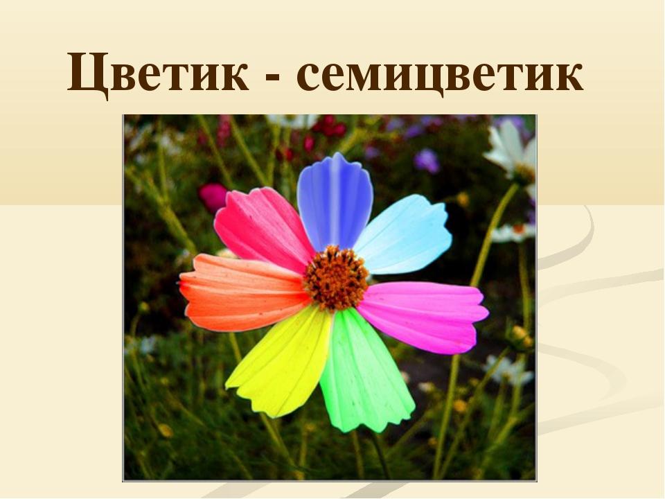 Цветик - семицветик