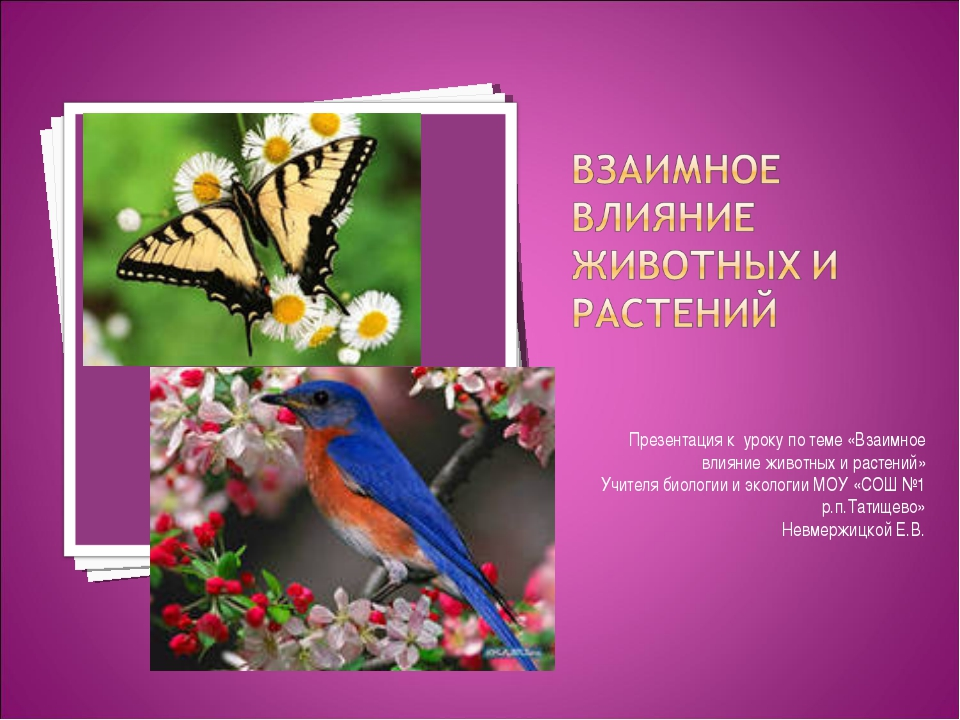 Презентация к уроку по теме «Взаимное влияние животных и растений» Учителя би...