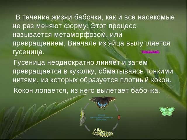 В течение жизни бабочки, как и все насекомые не раз меняют форму. Этот проце...