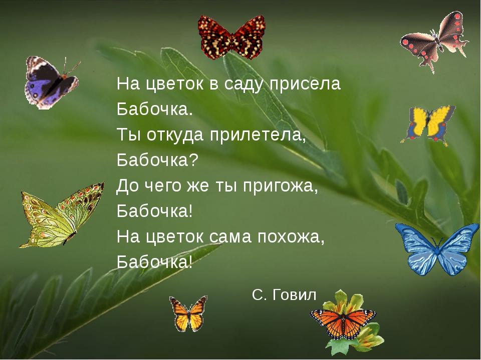 С. Говил На цветок в саду присела Бабочка. Ты откуда прилетела, Бабочка? До ч...