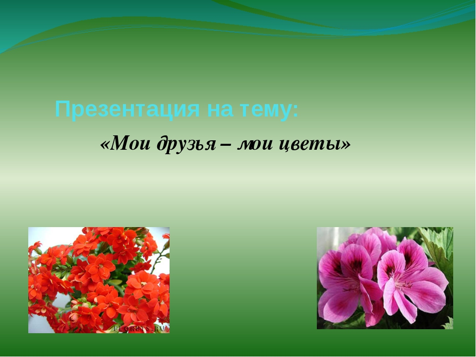 Презентация на тему: «Мои друзья – мои цветы»