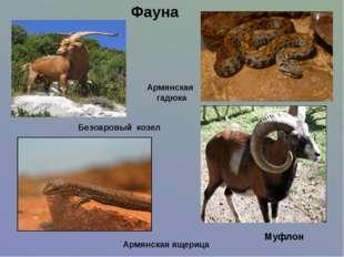 Фауна Армянская ящерица Армянская гадюка Безоаровый козел Муфлон