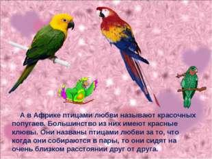 А в Африке птицами любви называют красочных попугаев. Большинство из них име