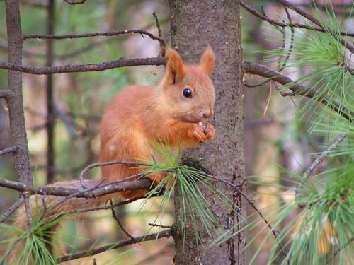 http://basik.ru/images/squirrels_life_1/015.jpg