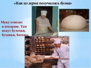 «Как из зерна получилась булка» Муку отвозят в пекарню. Там пекут булочки, б