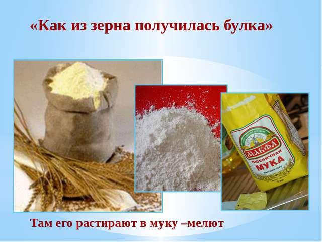 «Как из зерна получилась булка» Там его растирают в муку –мелют