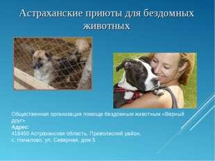 Астраханские приюты для бездомных животных Общественная организация помощи бе