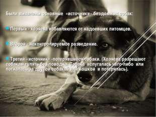 Были выявлены основные «источники» бездомных собак: Первый - хозяева избавляю