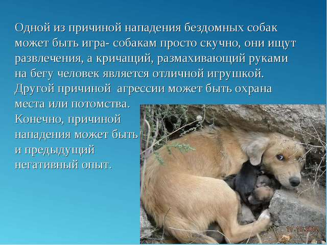 Одной из причиной нападения бездомных собак может быть игра- собакам просто с...