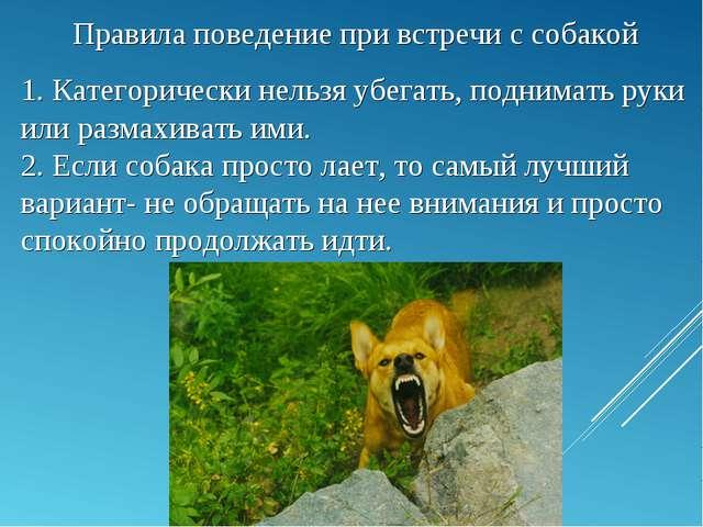 Правила поведение при встречи с собакой 1. Категорически нельзя убегать, подн...