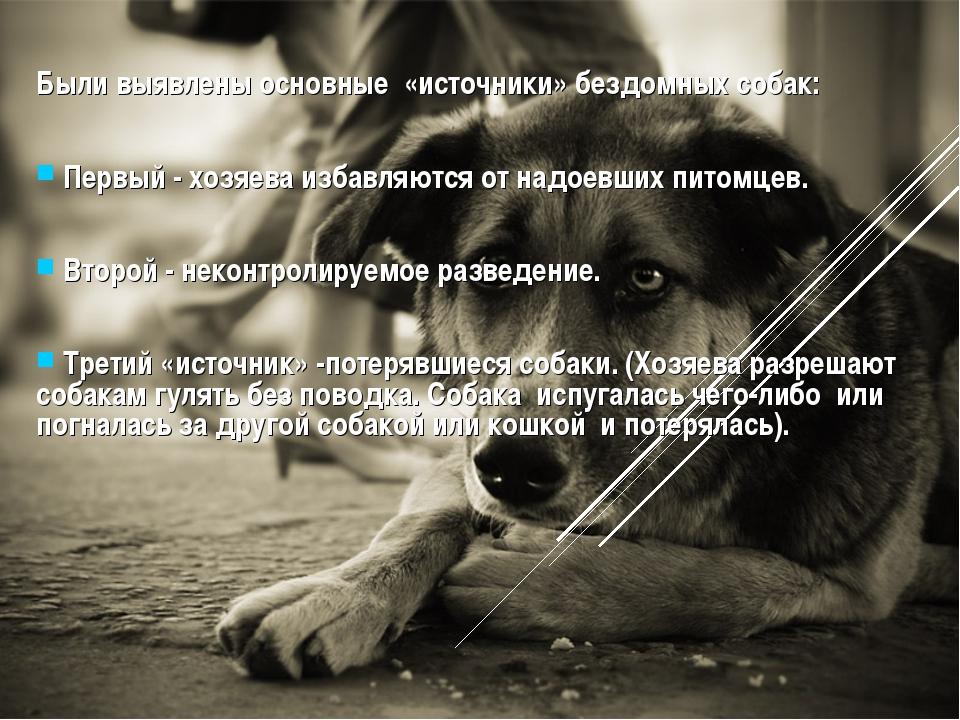 Были выявлены основные «источники» бездомных собак: Первый - хозяева избавляю...