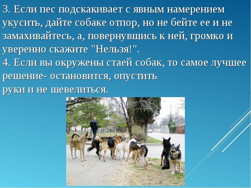 3. Если пес подскакивает с явным намерением укусить, дайте собаке отпор, но н...