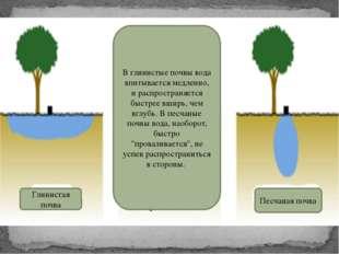 В глинистые почвы вода впитывается медленно, и распространяется быстрее вширь