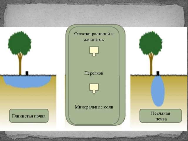 Как способность пропускать воду влияет на плодородие почвы? Глинистая почва П...