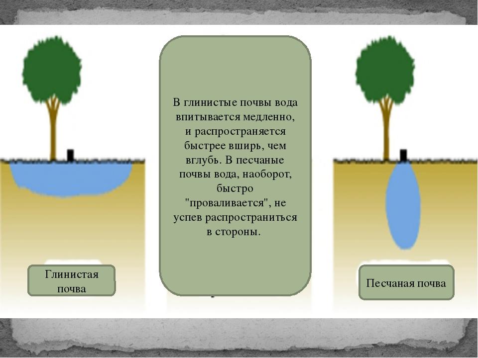 В глинистые почвы вода впитывается медленно, и распространяется быстрее вширь...