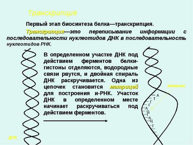 Конспект урока биосинтез белка класс 9класс
