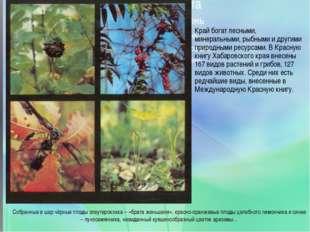 Край богат лесными, минеральными, рыбными и другими природными ресурсами. В