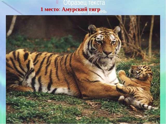 1 место:Амурский тигр