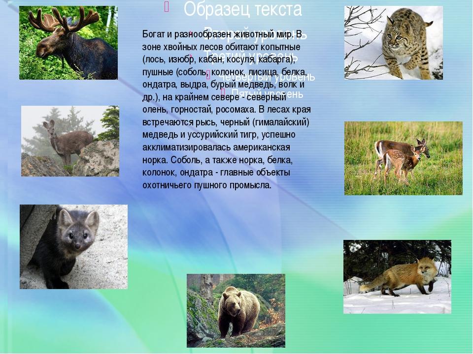 Богат и разнообразен животный мир. В зоне хвойных лесов обитают копытные (ло...