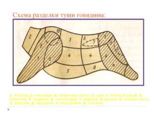 Схема разделки туши говядины: 1. лопатка (а. плечевая, б. заплечная часть); 2
