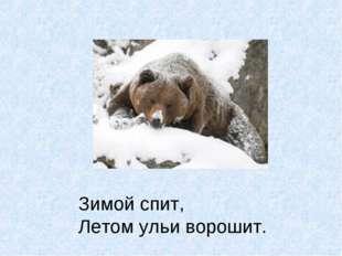 Зимой спит, Летом ульи ворошит.