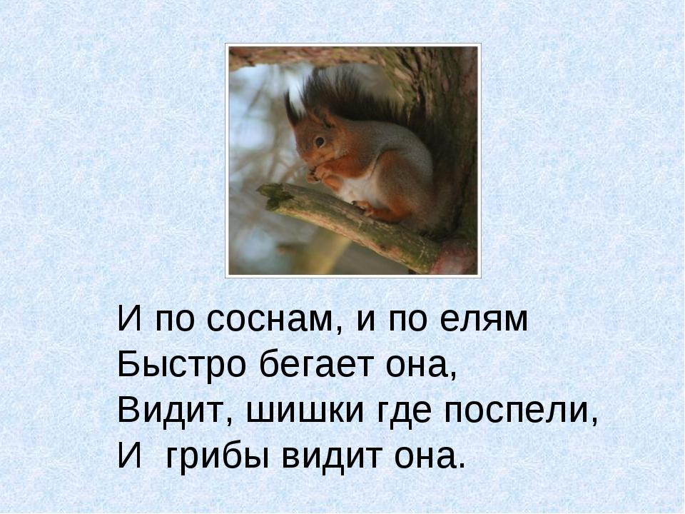 И по соснам, и по елям Быстро бегает она, Видит, шишки где поспели, И грибы в...