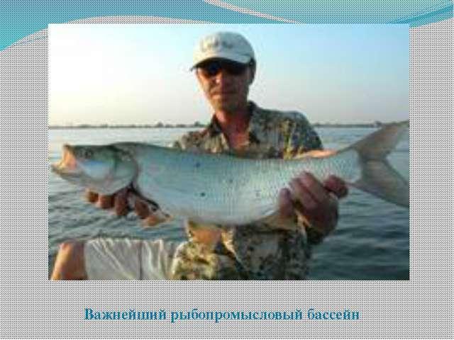 Важнейший рыбопромысловый бассейн