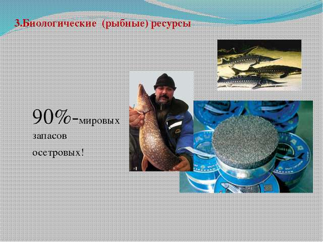 3.Биологические (рыбные) ресурсы 90%-мировых запасов осетровых!
