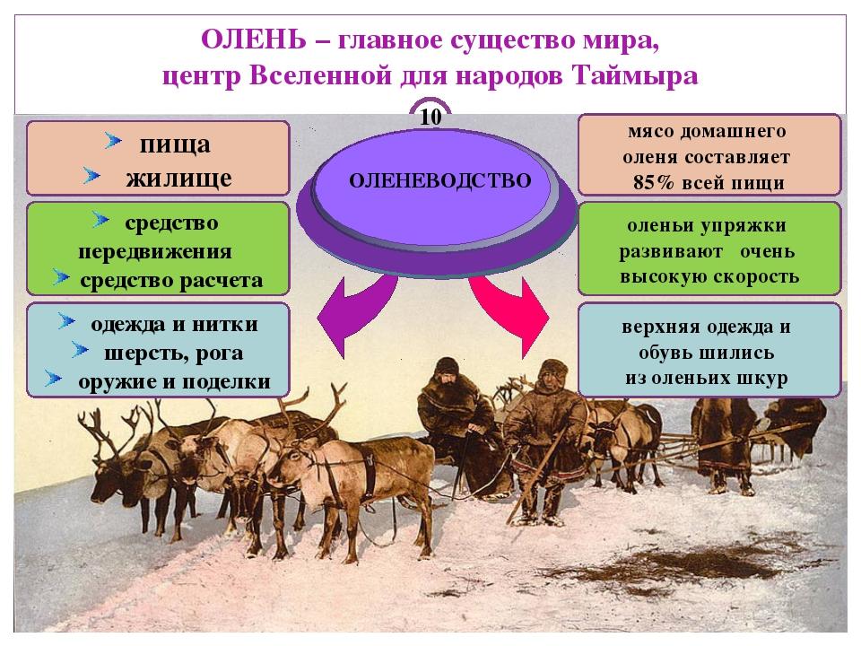 ОЛЕНЬ – главное существо мира, центр Вселенной для народов Таймыра ОЛЕНЕВОДС...