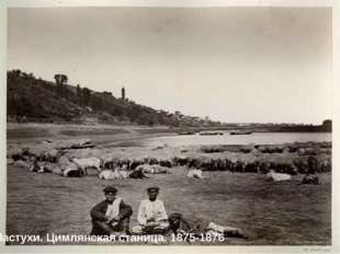 Пастухи. Цимлянская станица. 1875-1876