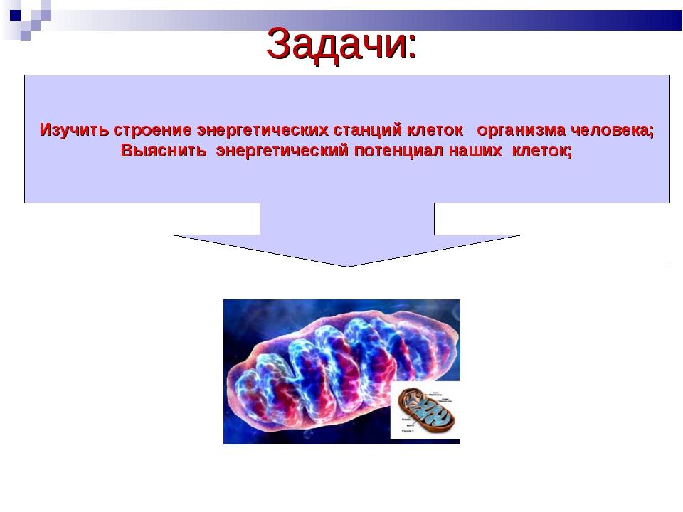 Задачи: Изучить строение энергетических станций клеток организма человека; Вы...