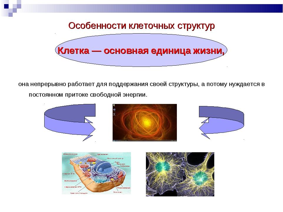 Особенности клеточных структур она непрерывно работает для поддержания своей...