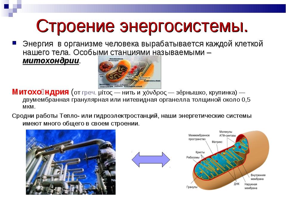 Строение энергосистемы. Энергия в организме человека вырабатывается каждой кл...