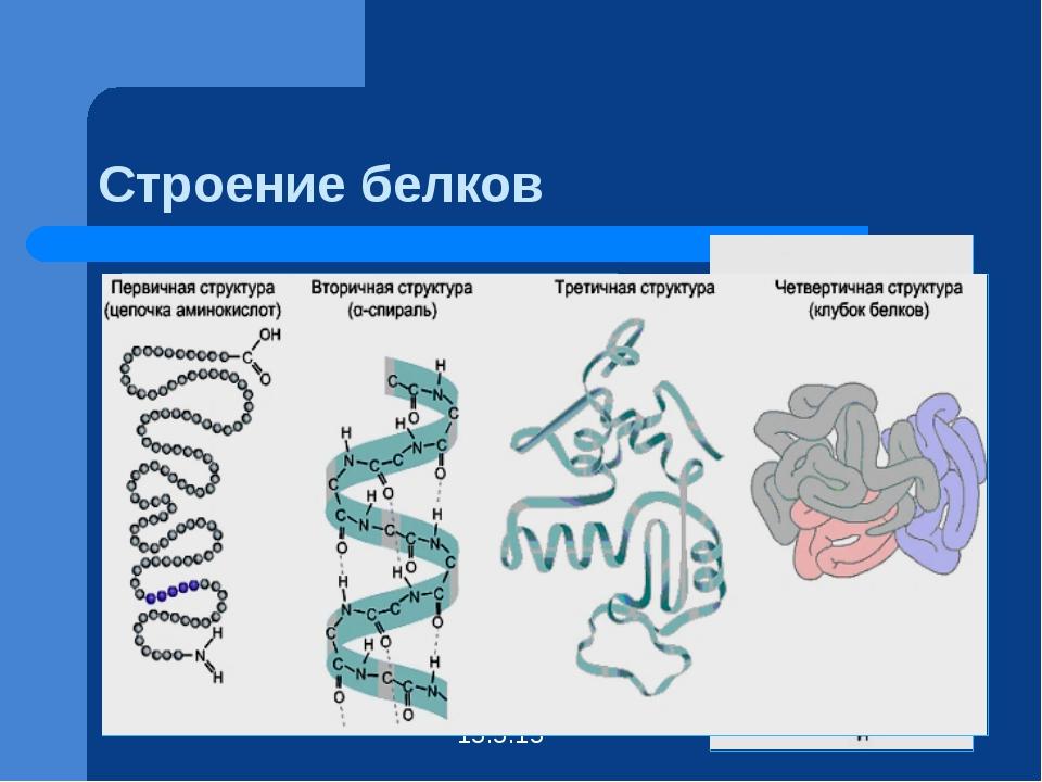 Строение белков Вторичная структура Первичная структура белка – это порядок ч...