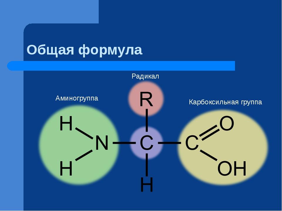 Общая формула Аминогруппа Карбоксильная группа Радикал