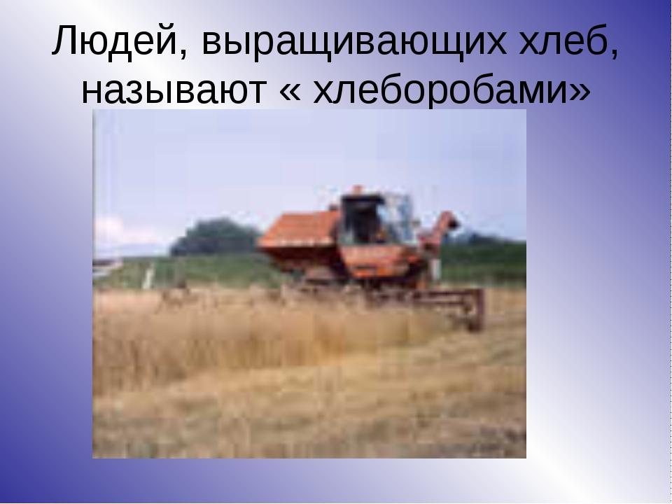 Людей, выращивающих хлеб, называют « хлеборобами»