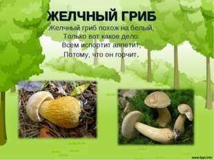 ЖЕЛЧНЫЙ ГРИБ Желчный гриб похож на белый, Только вот какое дело: Всем испорти