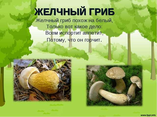 ЖЕЛЧНЫЙ ГРИБ Желчный гриб похож на белый, Только вот какое дело: Всем испорти...