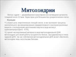 Митохондрии Митохо́ндрия — двумембранная гранулярная или нитевидная органелла