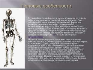 Мужской и женский скелет в целом построены по одному типу, и кардинальных раз