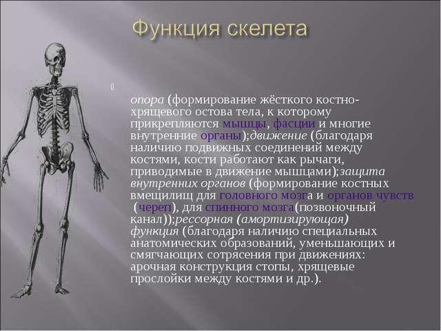 опора(формирование жёсткого костно-хрящевого остова тела, к которому прикре...